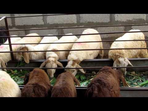 Sheep farming business plan in karnataka super