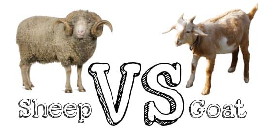 Sheep Farming Advantag...